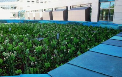 Green roofs improve our lives. Why don't we have more of them?